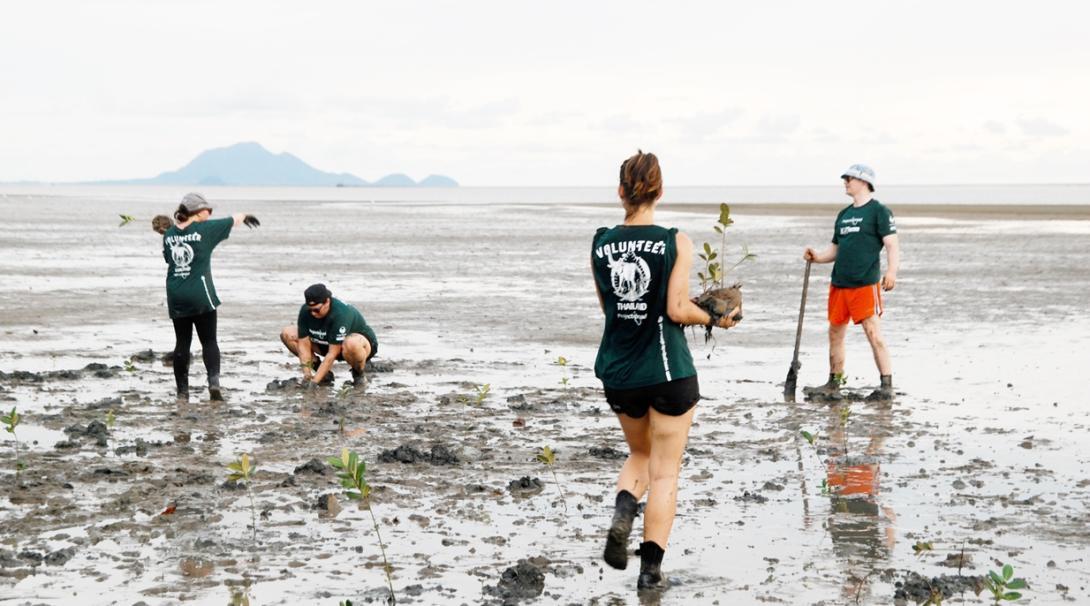 タイでマングローブの植林に取り組む高校生環境保護ボランティア